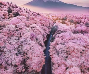 japan, pink, and spring image