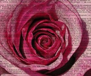 rose, book, and art image