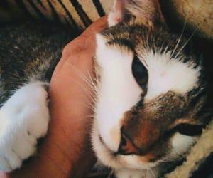 animal, cat, and gato image