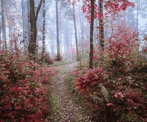 autumn, belleza, and camino image
