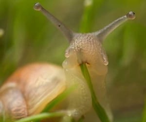 snail, grass, and eating image