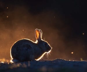 bunny, easter, and night image