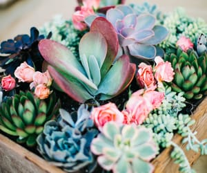 plants, flowers, and succulent image