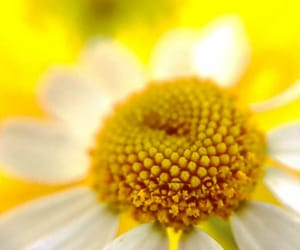 flowers, macro, and upclose image