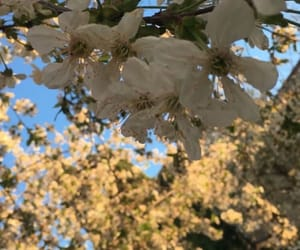 april, flowers, and cherry image