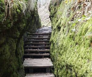 hike, nature, and wood steps image