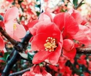 art, beautiful, and flower image