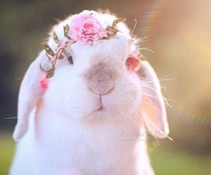 Animales, conejo, and naturaleza image