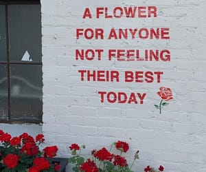 flower, red, and wall image