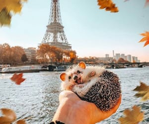 animal, autumn, and baby image