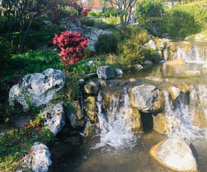 garden, water, and nature image