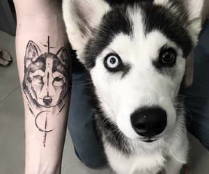 tattoo, dog, and husky image
