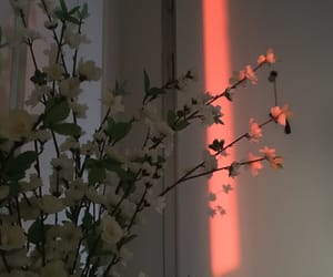 flowers, home, and sunset image