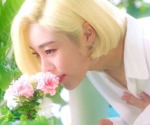 flowers, kpop, and mamamoo image