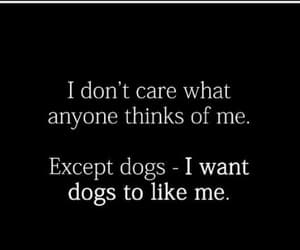 dogs, funny, and qoute image