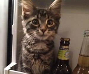 cat, drink, and cute image