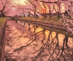 japan, reflection, and peach image