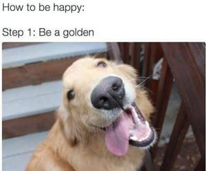 animal, happy, and dog image