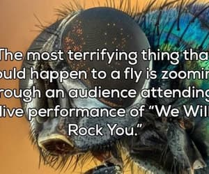 bug, fly, and we will rock you image