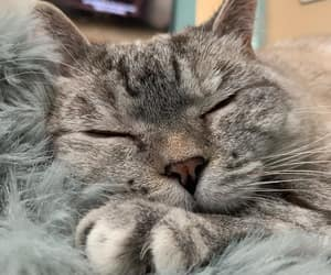 😻 and милый смешной кот image