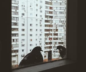 beauty, bird, and moscow image