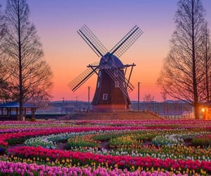colors, sunset, and flowers image