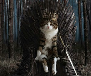 cat, got, and game of thrones image