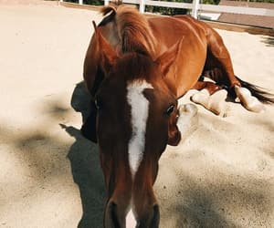 animals, equestrian, and horse image