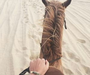 aesthetic, animals, and beach image