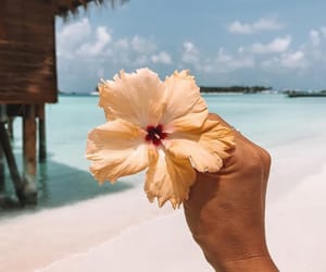 beach, flowers, and holiday image