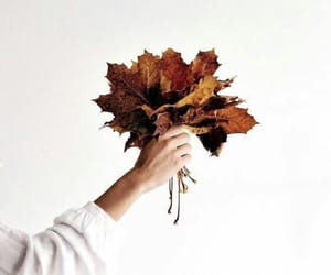autumn, fall, and hand image