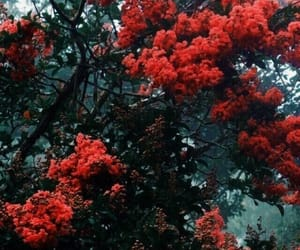 flowers, tree, and red image