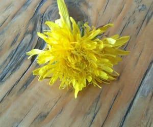 beautiful, like, and flower image