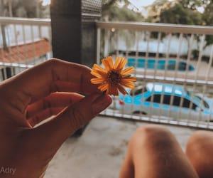 beach, bloom, and criative image