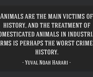 animals, words, and history image