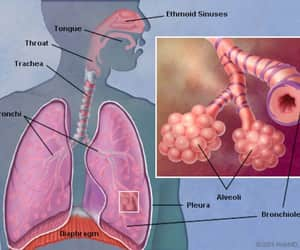 food, lungs, and health image