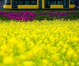 yellow flowers, beautiful landscape, and yellow roses image