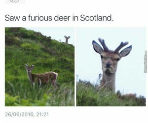 funny, deer, and joke image