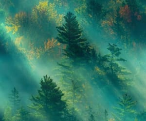 aesthetic, calm, and forest image