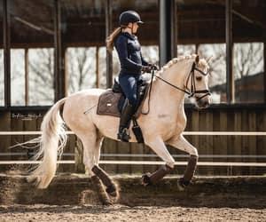 horse, riding, and palomino image