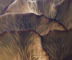 mushroom, nature, and photography image