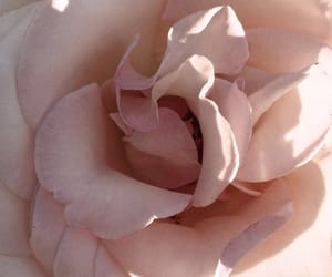 beautiful, blogger, and flower image