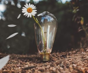 daisy, lamp, and photography image