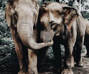 animal, big, and two image