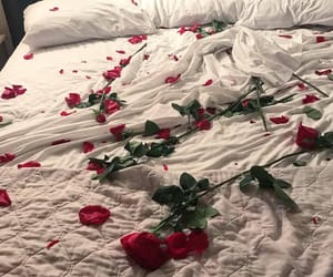 rose, bed, and flowers image
