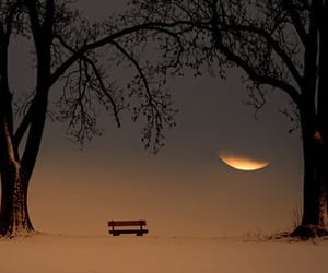 moon, tree, and snow image