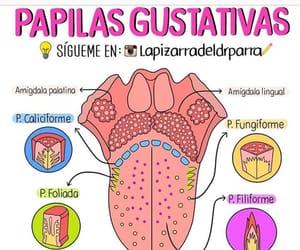 anatomia, medicina, and lengua image