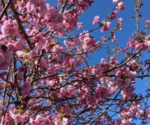 aesthetic, april, and blossoms image