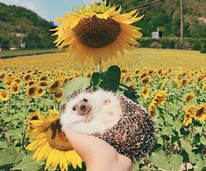 animal, sunflower, and cute image