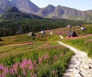 flowers, Houses, and mountains image